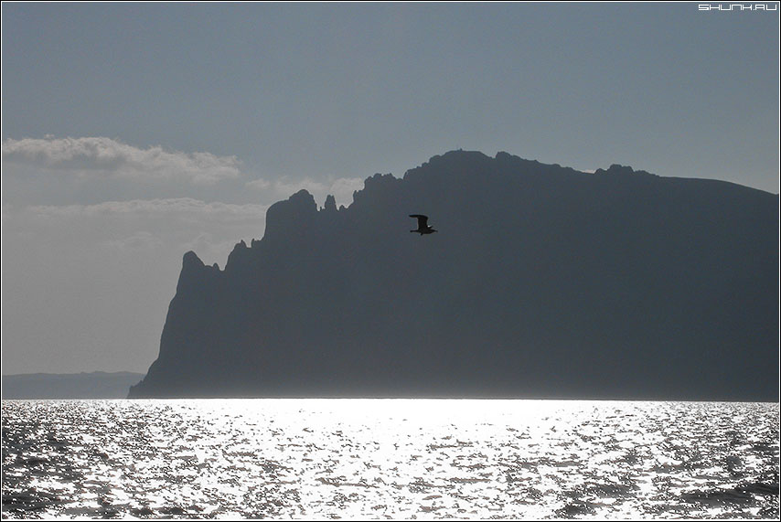 Полет - чайка кара-даг крым горы море фото фотосайт