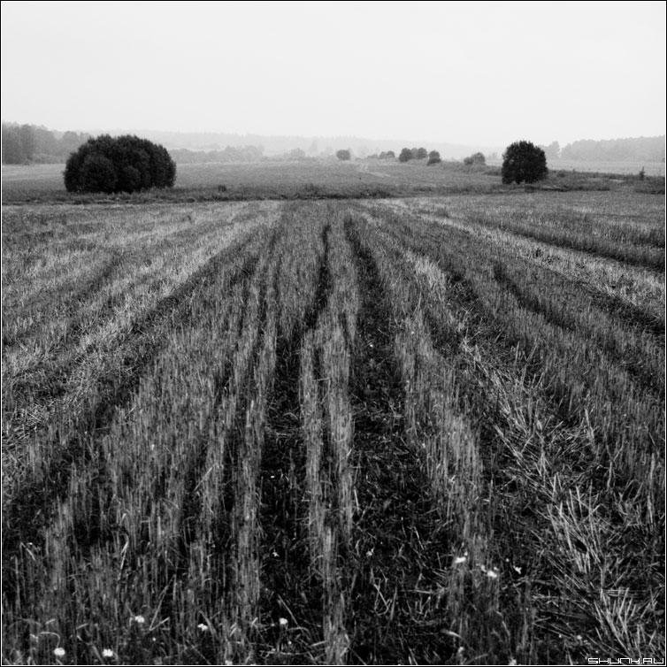 Борозды... - квадрат чернобелая поле скошено деревня фото фотосайт
