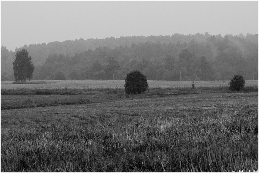 Попытка найти помпозицию - поле небо деревья чернобелая фото фотосайт
