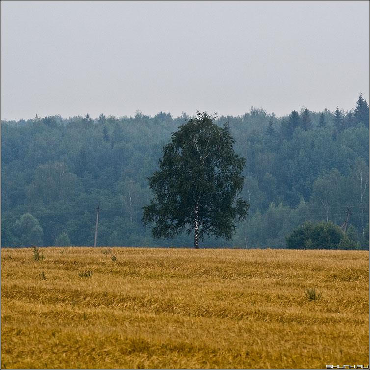 Триколор - деревня поле береза лес полосы квадрат фото фотосайт