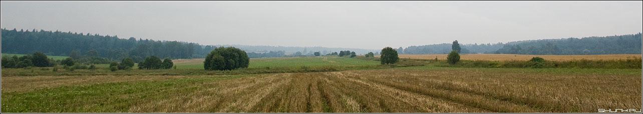 Панорама одного кадра - лето конеч поля лес туман деревня панорама шустиково фото фотосайт