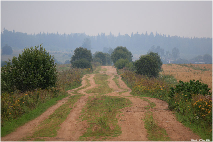 Дорога в Ильинское - деревня август лето дорога поля туман фото фотосайт