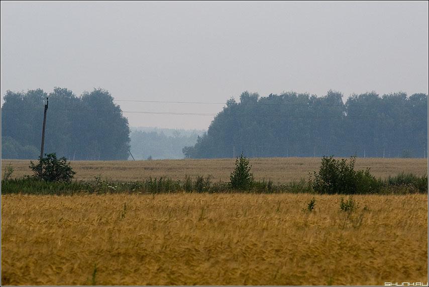 Туманный день - поле лес туман деревня столб провода фото фотосайт