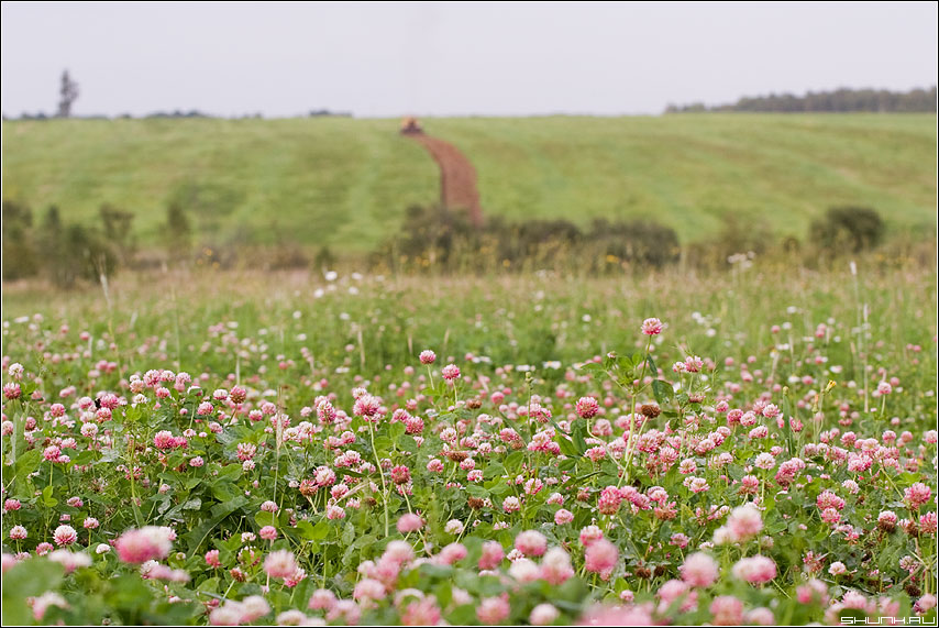Клеверок - поле клевер деревня трактор пашня фото фотосайт
