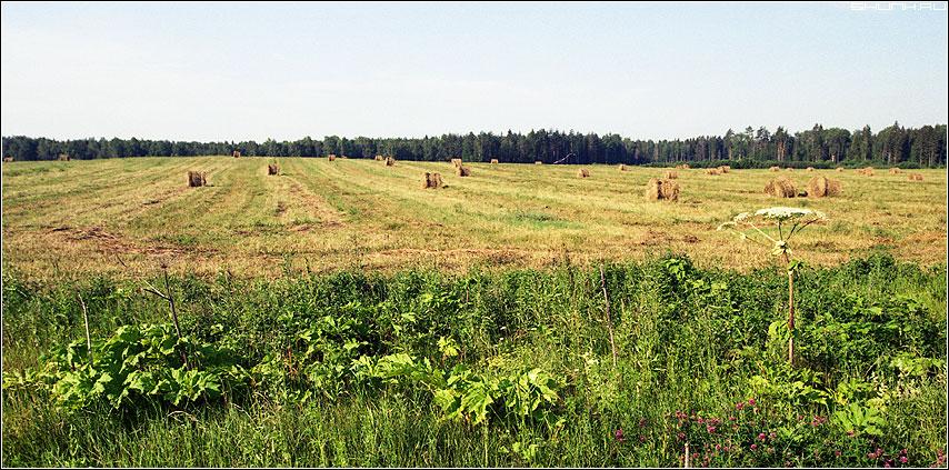 Убранство - kodak пленка поле деревня борщевик фото фотосайт