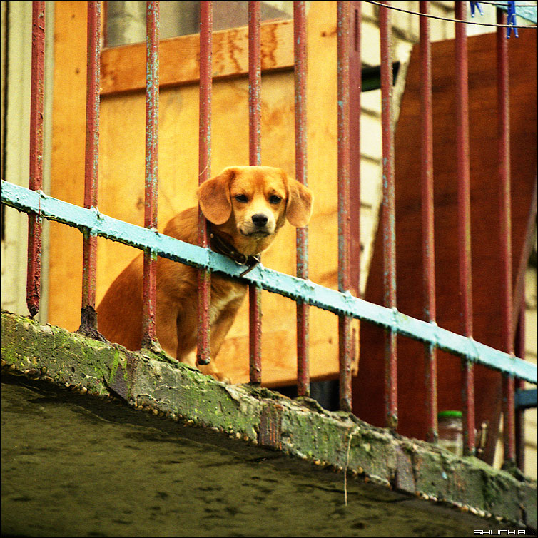 Ждет хозяина - собака балкон цвет пленка kodak квадрат фото фотосайт