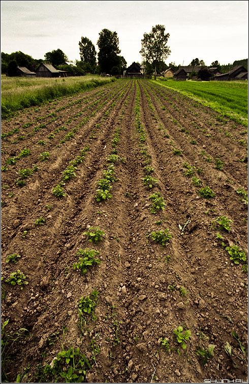 Картошка - поле картошка дом лето пашня kodak фото фотосайт