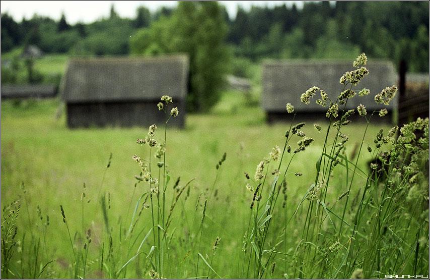 Травинки - kodak пленка поле деревня сарай травинки фото фотосайт