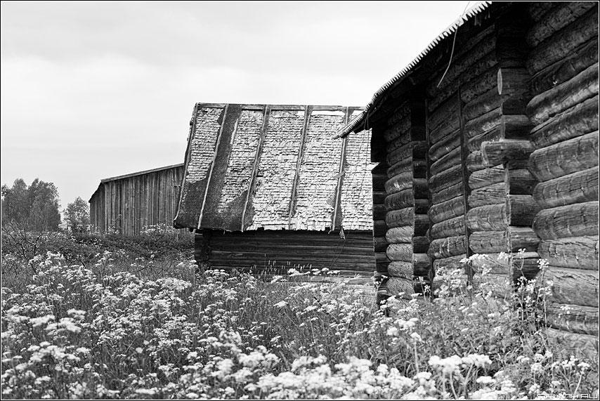 Дворы - деревня чернобелая сараи дворы лето фото фотосайт