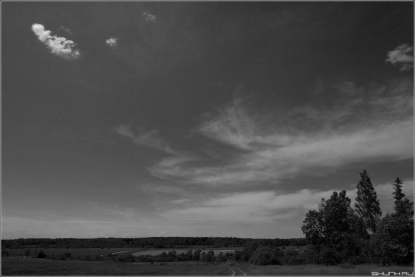 Когда небо ... - чернобелая небо red фильтр елки облачко фото фотосайт
