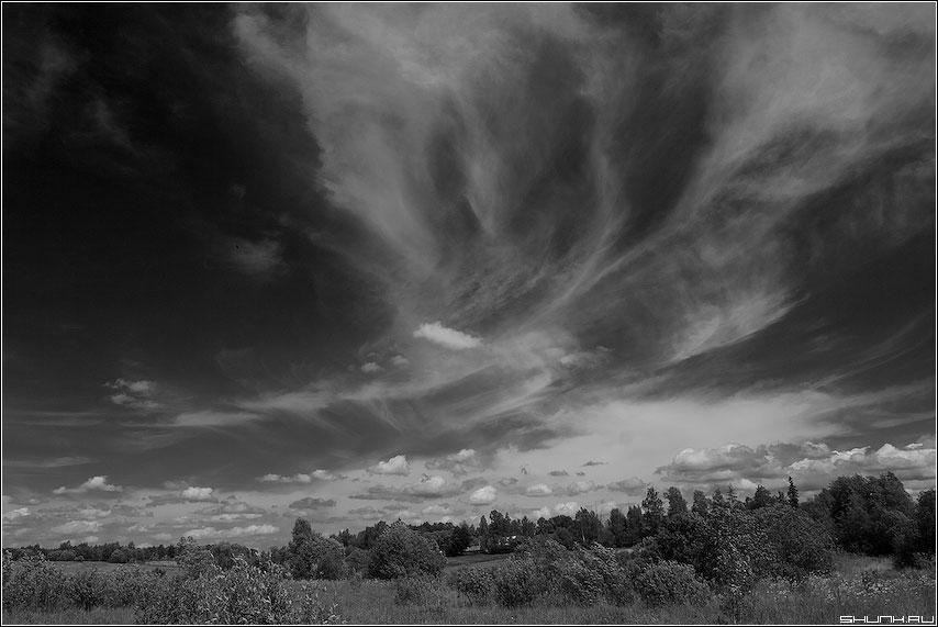 Когда небо над лесом играет - чернобелая небо red фильтр лес узоры фото фотосайт