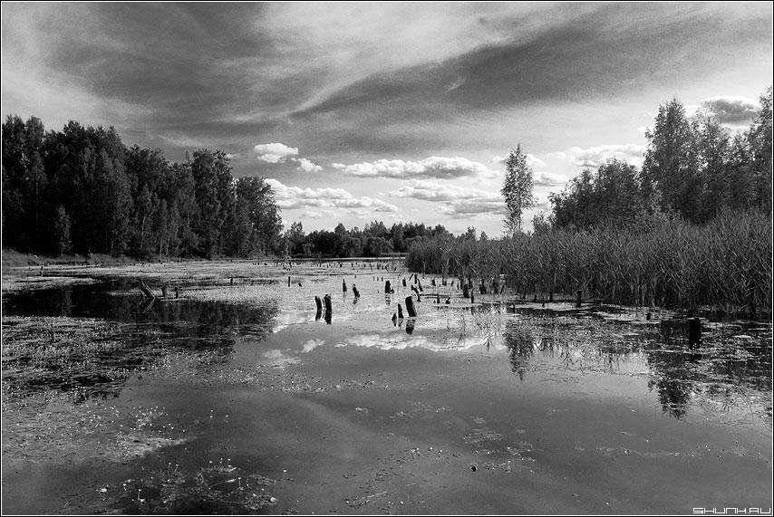 Когда небо тонет в болоте - чернобелая небо red фильтр болото фото фотосайт