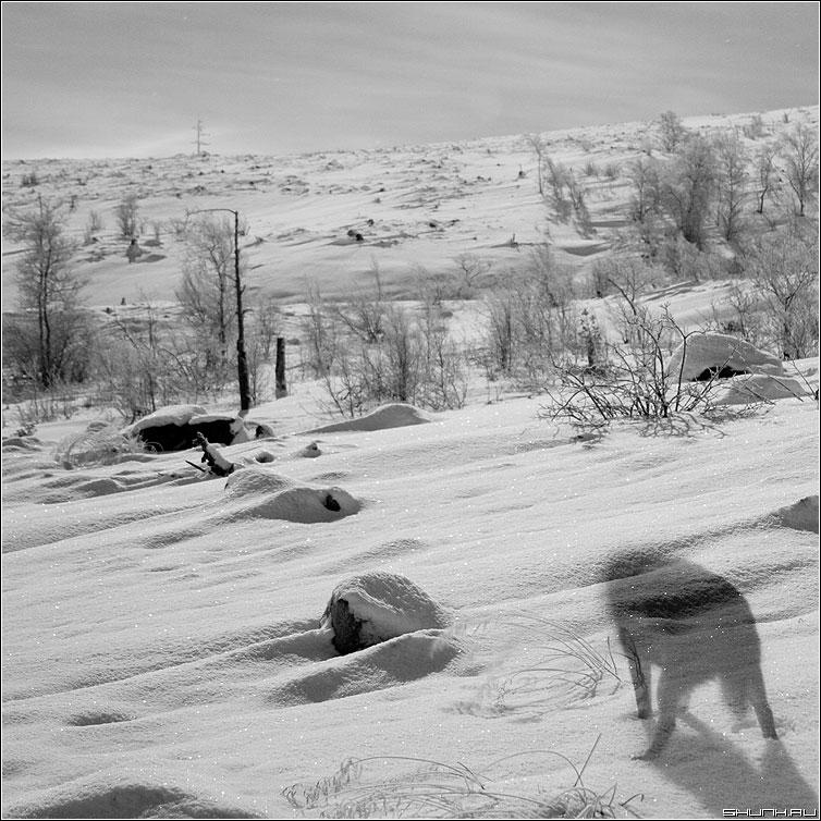 Призрак ночного волка - волк тень ночь зима никель квадрат черно-белая свет луна фото фотосайт
