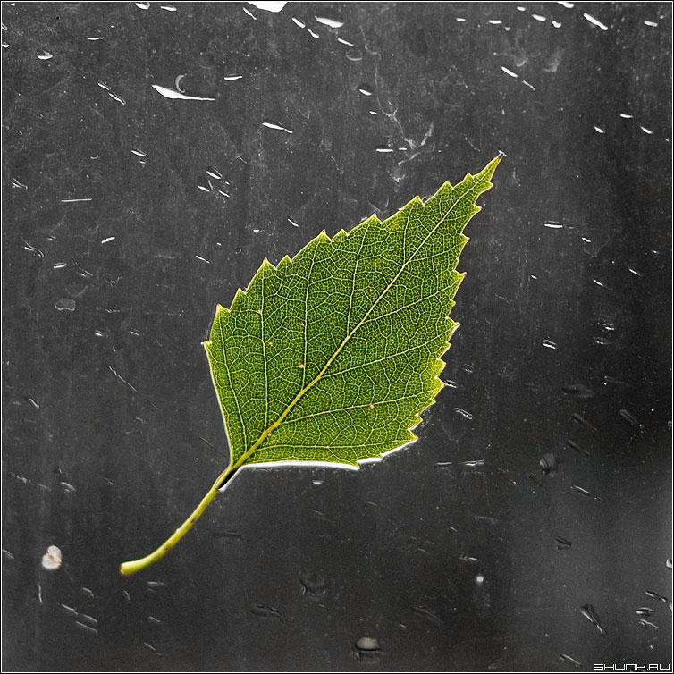 Последний лист на стекле - жилки лист осень стекло капли квадрат палитра фото фотосайт