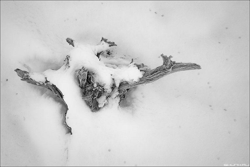 Кряго - каряга зима снег черно-белая фото фотосайт