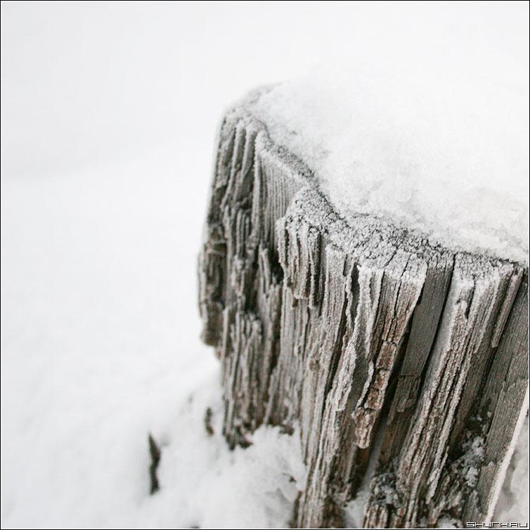 Про иней на пне - пень снег квадрат зима фото фотосайт