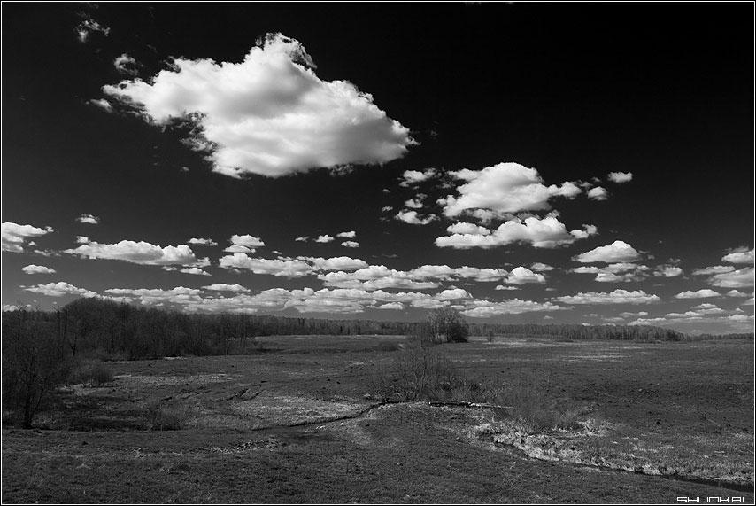 Белогривые лошадки - небо черно-белая деревня лето крбково фото фотосайт