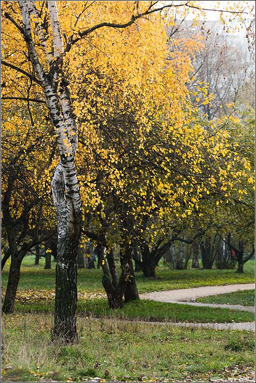 Что такое Осень?... - осень небо береза листва фото фотосайт