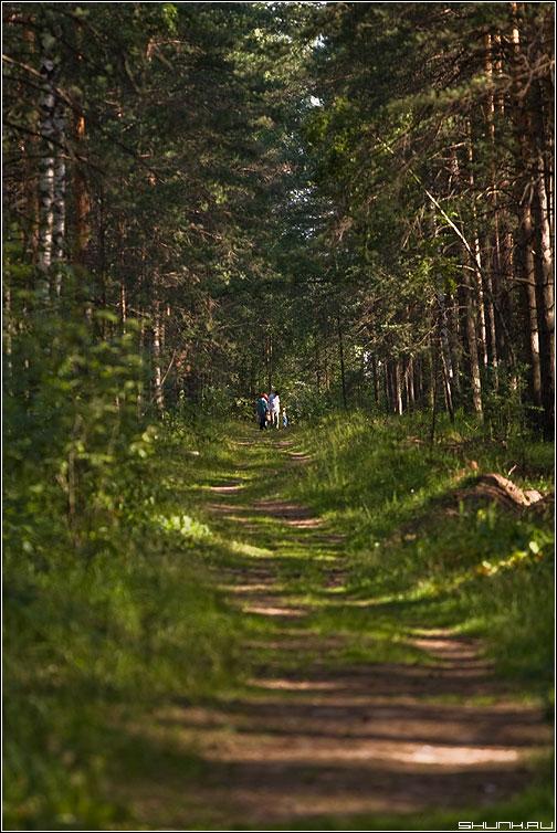 Погрибы - деревня лес тропинка семья грибы фото фотосайт