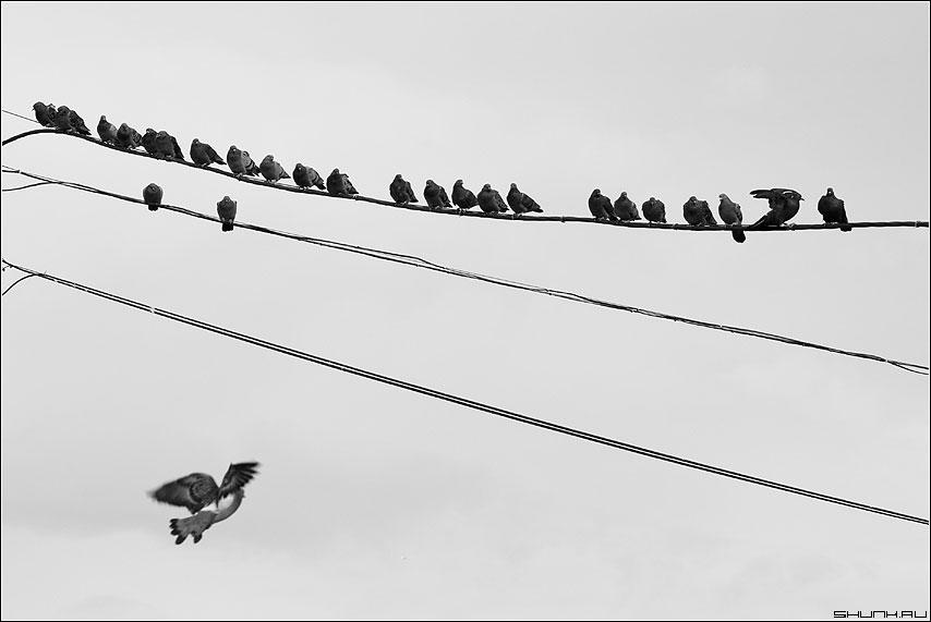 25+1 - голуби провода черно-белая небо фото фотосайт