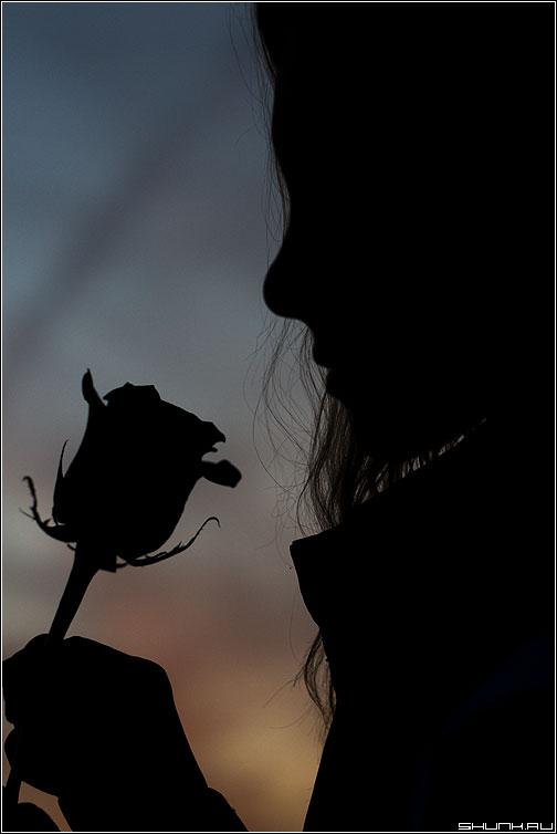 Подарил? - девушка роза закат портрет профиль фото фотосайт