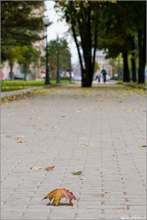 Кленовый лист, кленовый лист... - лист осень бульвар фото фотосайт
