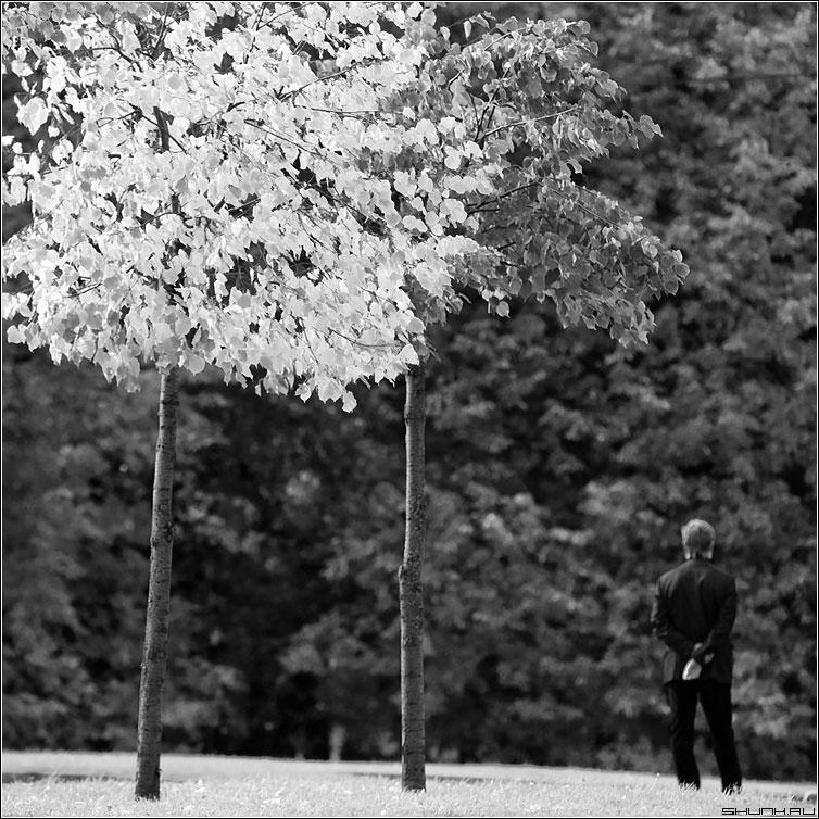 Скоро облетят. Печально. - черно-белые осень деревья листва человек природа деревья квадрат фото фотосайт