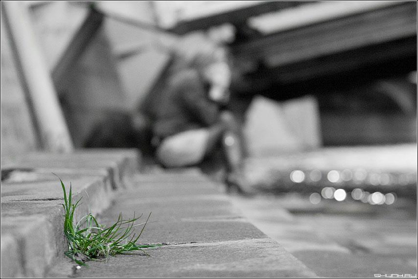 Городское - палитра трава зеленый цвет чёрнобелая набережная фото фотосайт