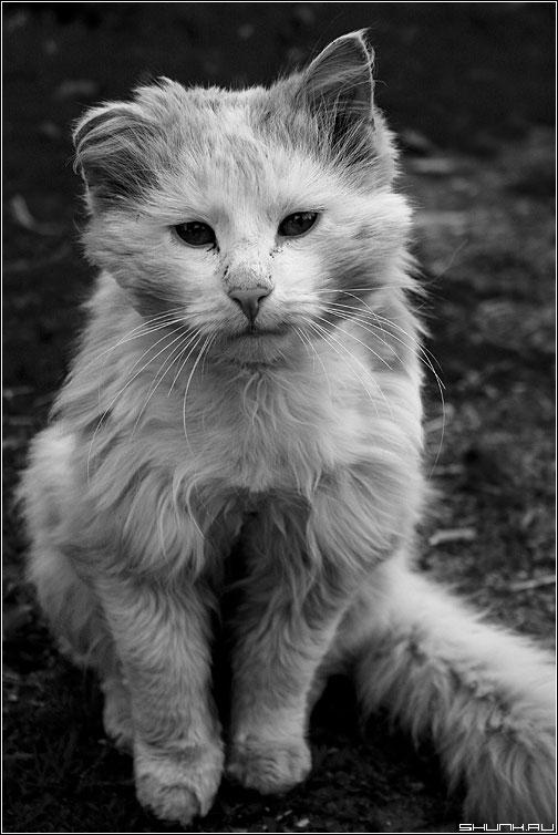 Ну чтож ты, брат!? - кот живность белый помятый взгляд фото фотосайт