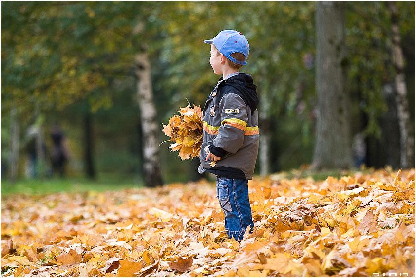 Любви все возрасты покорны - осень листва мальчик парк желтое букет фото фотосайт