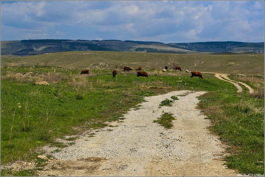 Дорога в вечность - крым дорога горизонт небо коровы фото фотосайт
