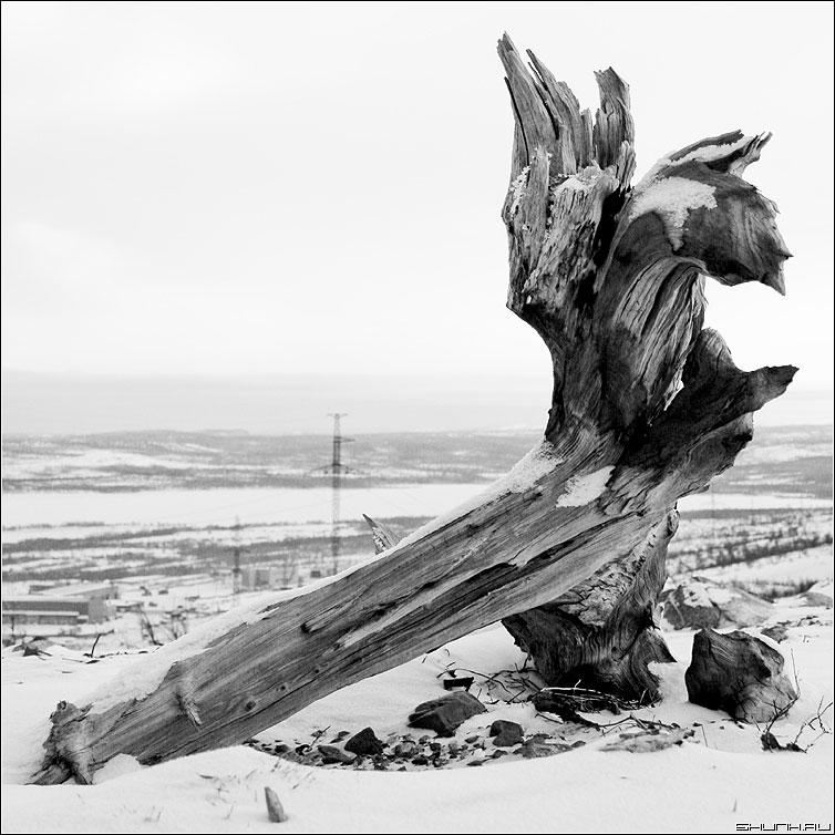 Коряго - никель холмы зима снег коряга фото фотосайт