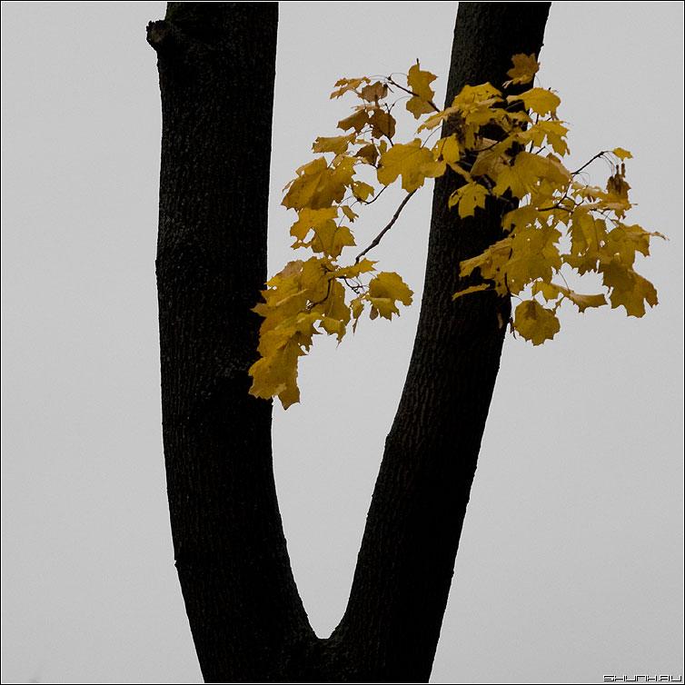 Victory - V осень буква листья желтое фото фотосайт