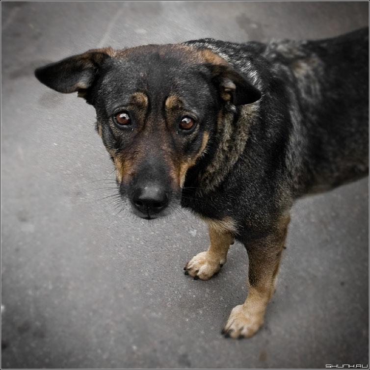 Жалобный взгляд - собака взгляд дворняжка глаза квадрат фото фотосайт