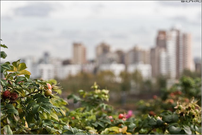Осенний город - город шиповник блюр фото фотосайт