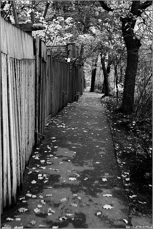 Вдоль забора - забор чёонобелое осень листва деревья фото фотосайт