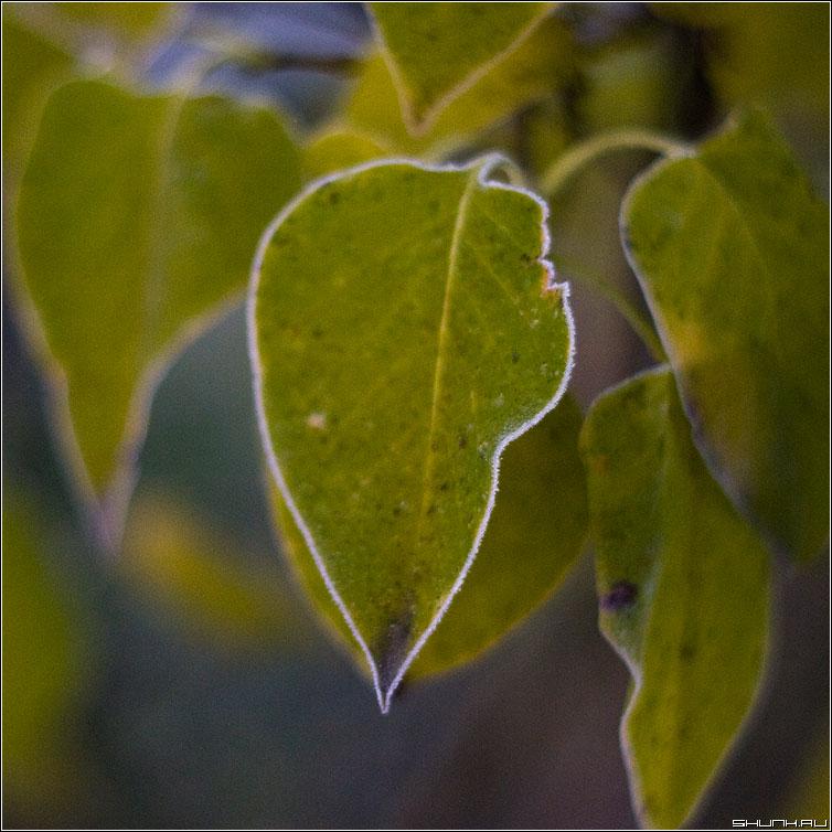Контур - квадрат лист мороз контур макро фото фотосайт