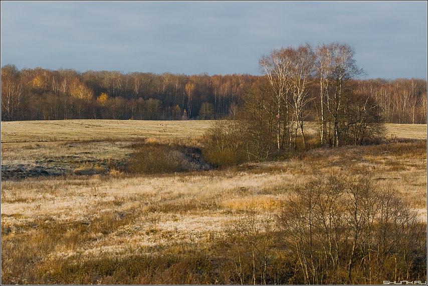 Осень в моей деревне - поле березы крюково лес небо осень деревня фото фотосайт