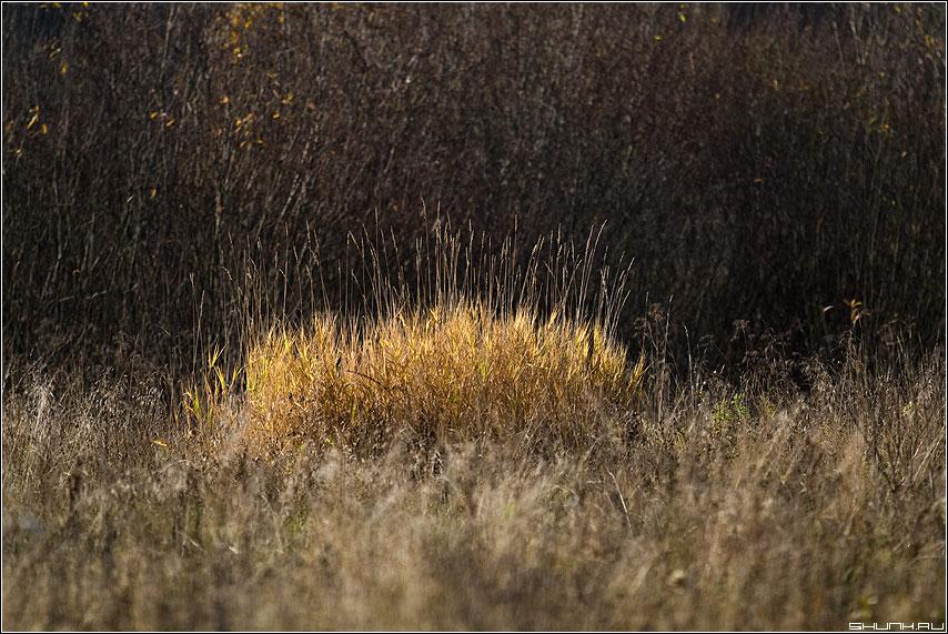 Кустик - осень куст трава деревня цвет фото фотосайт