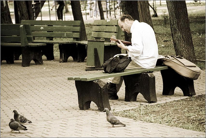 Музыка голубям - голуби парк мужик гитара стилизация фото фотосайт