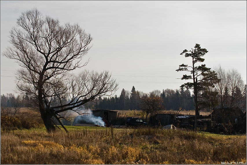 Старая ветла - ветла деревня ильинское дым дом фото фотосайт