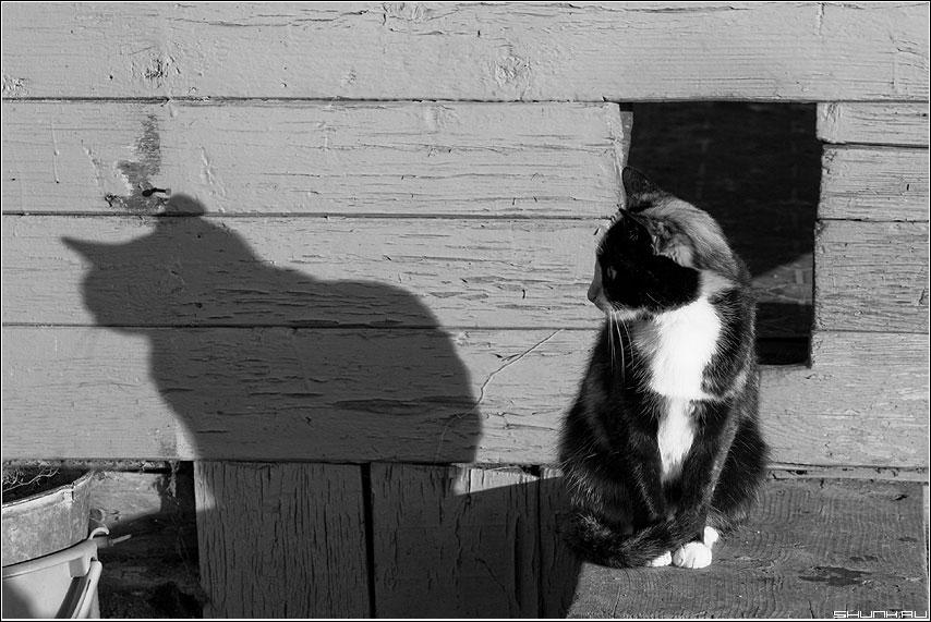 День сурка - кот тень чёрнобелый деревня ход фото фотосайт