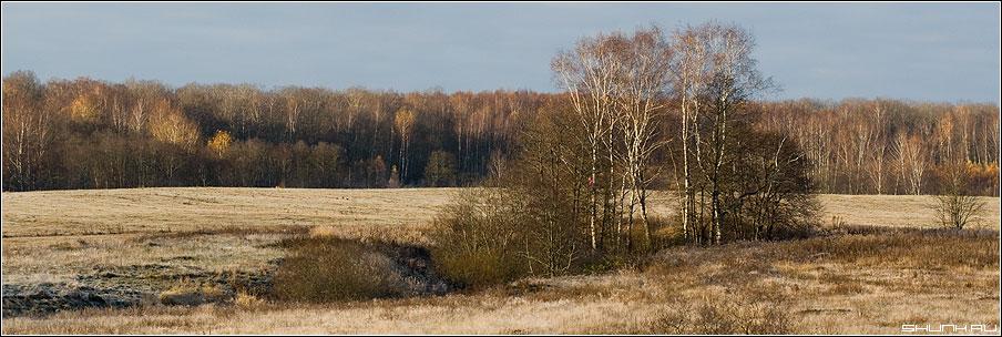 Виды осени - осень поля деревня березы лес фото фотосайт