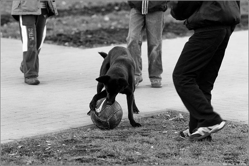 Дворовые игры... - дети собака чёрнобелое двор мяч ноги фото фотосайт