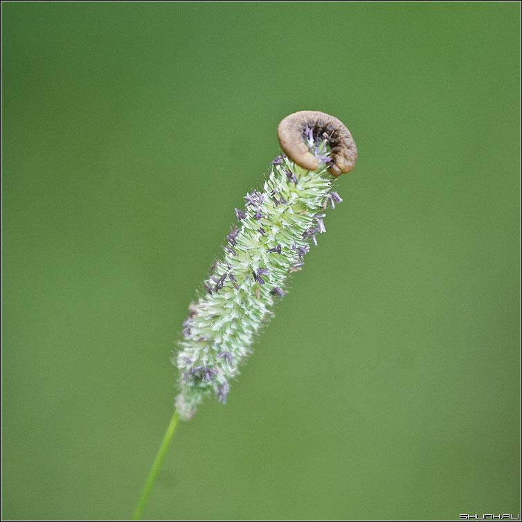 НИМБ - травинка квадрат макро зеленый фото фотосайт