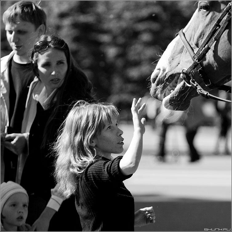 Про одну лошадь - лошадь морда девушка квадрат чёрнобелые фото фотосайт