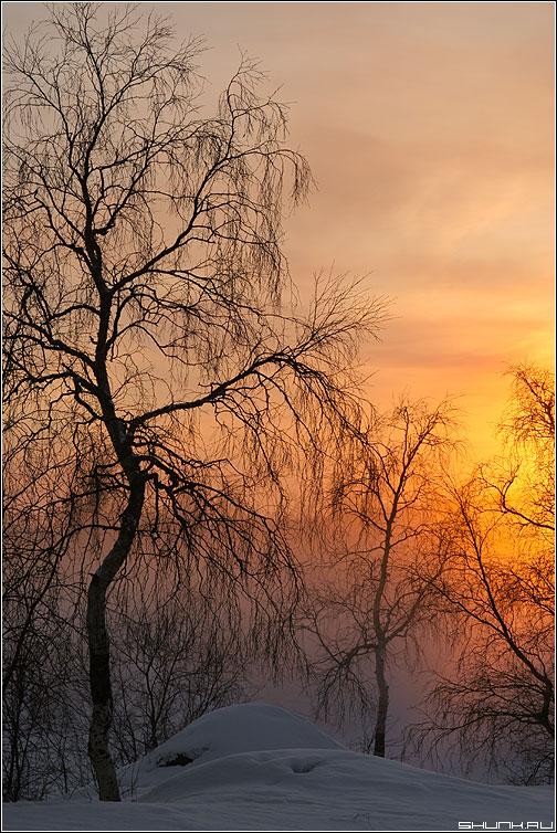 Туманный рассвет зимой - зима туман снег солнце рассвет никель береза ветви фото фотосайт