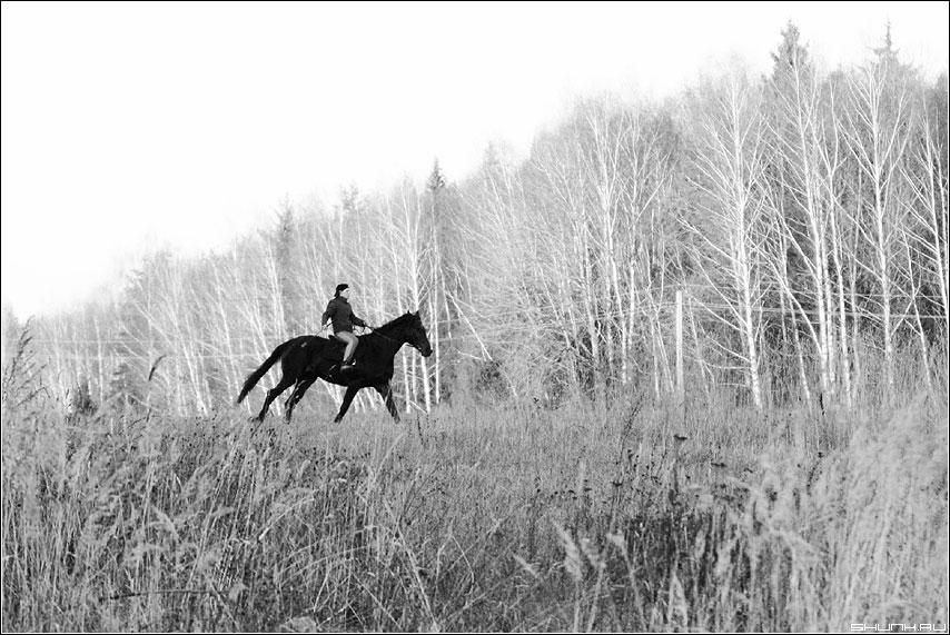 Мне так бы промчаться... - лошадь поле кусты трава чёрно-белые девушка всадник осень фото фотосайт