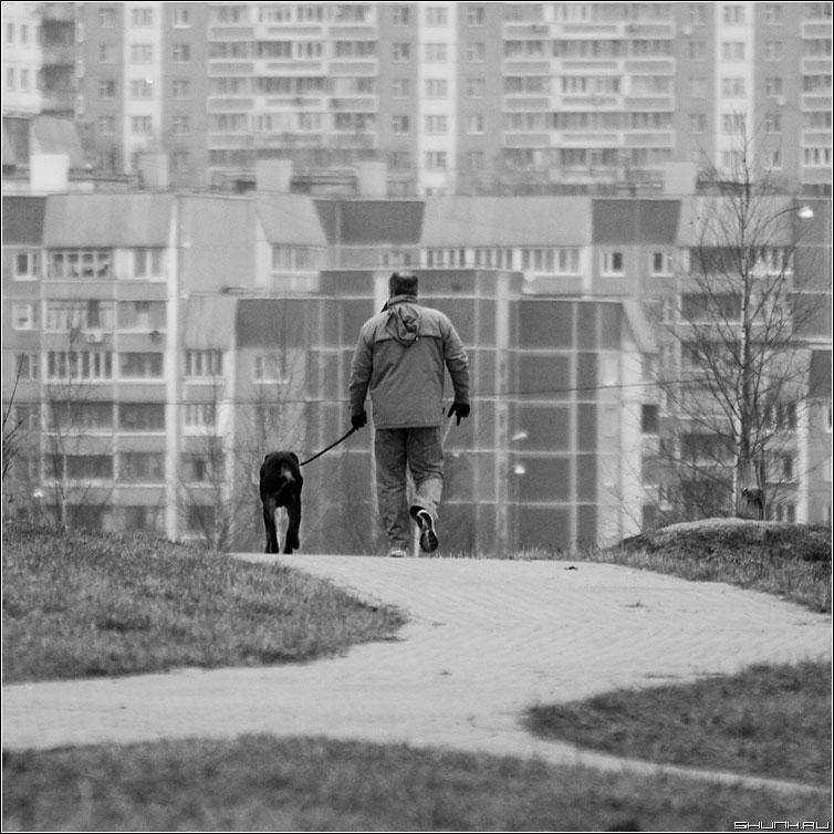 Прогулка - собака мужик город дома квадрат фото фотосайт