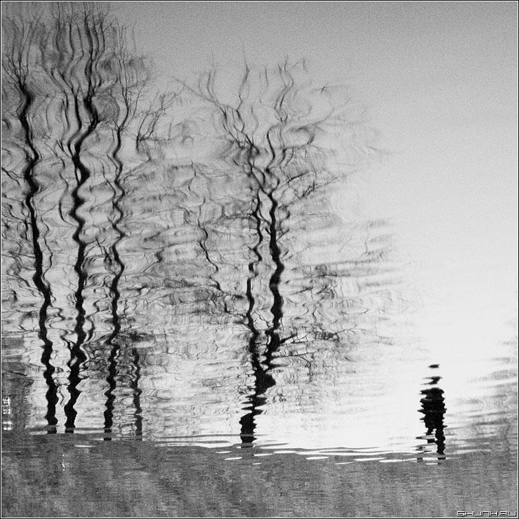 Поплыло... - отражение человек деревья квадрат чёрно-белые фото фотосайт